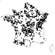 Galium palustre L. - carte des observations