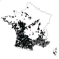 Rubia peregrina L. - carte des observations