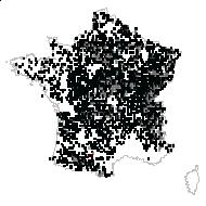 Populus tremula L. - carte des observations