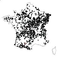 Melampyrum pratense L. - carte des observations