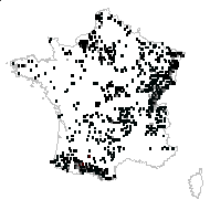 Cardia montana (L.) Dulac [1867] - carte des observations
