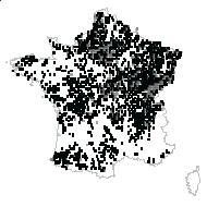 Arum maculatum L. - carte des observations