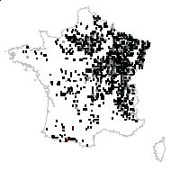 Convallaria majalis L. - carte des observations