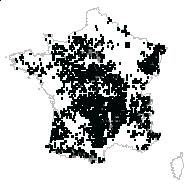 Avenella flexuosa (L.) Drejer - carte des observations