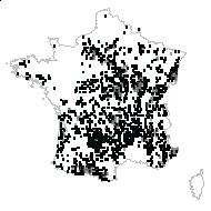 Festuca heterophylla Lam. - carte des observations