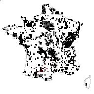 Lolium perenne L. - carte des observations