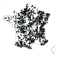 Melica uniflora Retz. - carte des observations