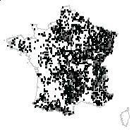 Poa nemoralis L. - carte des observations