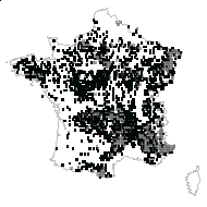 Pinus sylvestris L. - carte des observations