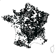 Dryopteris filix-mas (L.) Schott - carte des observations
