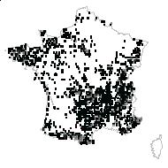 Polypodium vulgare L. [1753] - carte des observations
