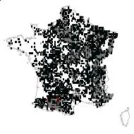 Acer campestre L. - carte des observations