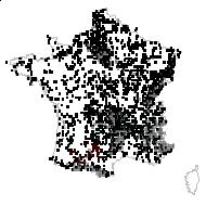 Achillea millefolium L. - carte des observations