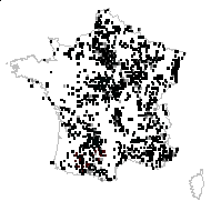 Agrimonia eupatoria L. - carte des observations