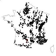 Asperula cynanchica L. - carte des observations