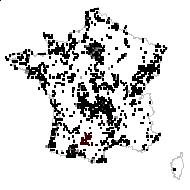 Hypochaeris radicata L. - carte des observations
